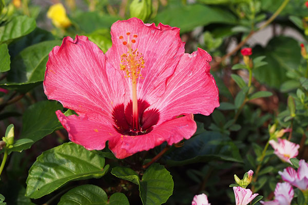 flower pink red tropical