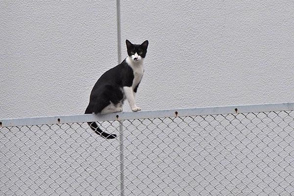 こまち フェンス上からこちら見る