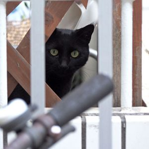 kito watching me fence