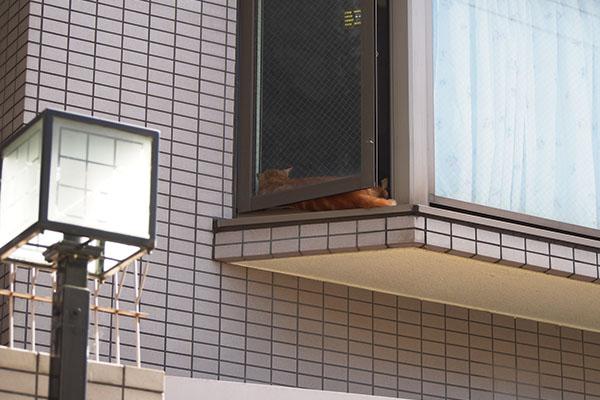 窓と網戸の間にチャクラ