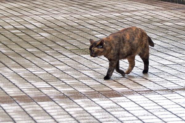 ロミ 歩くレフを見てる