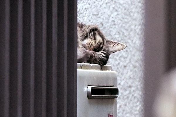 普段は壁際で寝ているタッチー