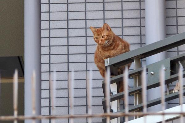 上から仔猫を見ていた チャクラ