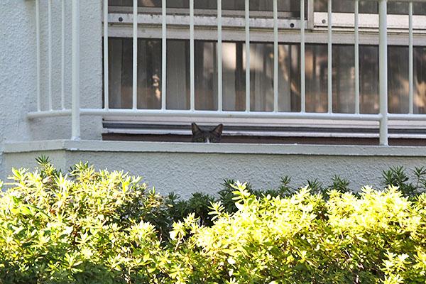 ベランダに猫耳 レックス