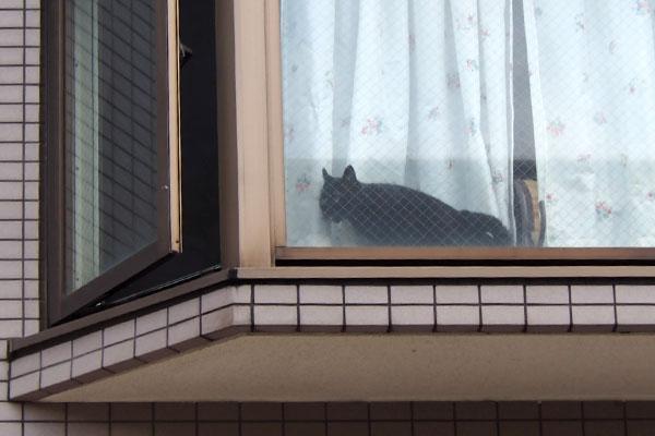 よそ様宅黒猫さん1