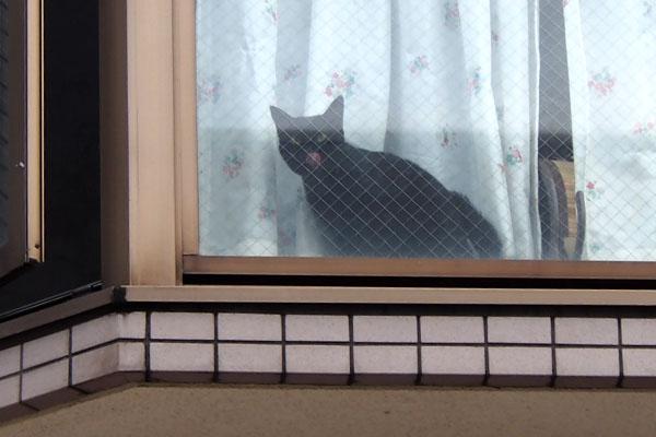 よそ様宅黒猫さん2 ぺろ