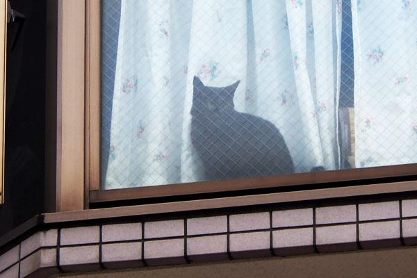 よそ様宅黒猫さん3 警備