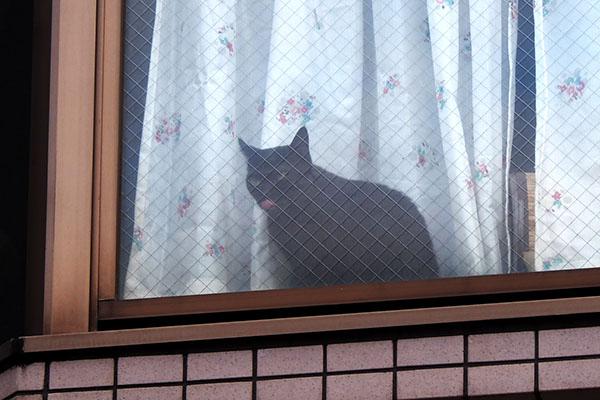 よそ様宅黒猫さん4