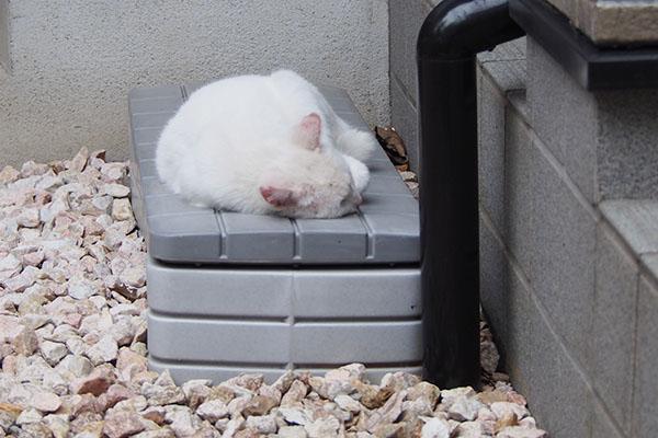 うさぎ 寝んね 良い場所
