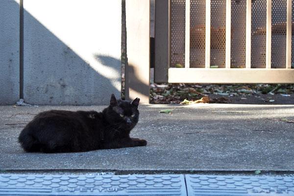 クーロンとフェンスの向こうに茶色猫ズ