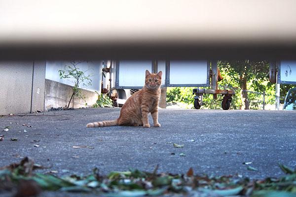 仔猫その1だけ