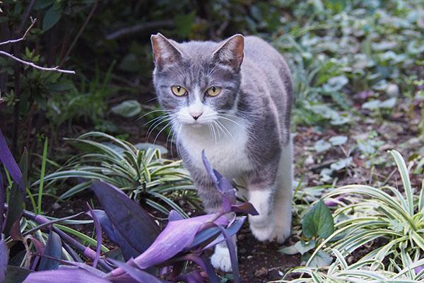 レックス 美猫さん