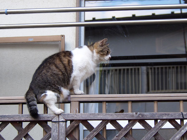 momo on the fence