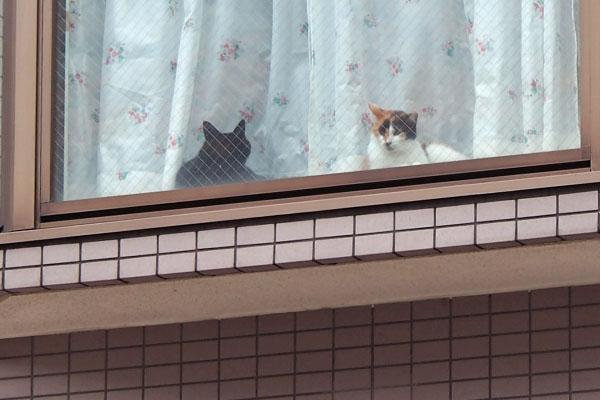 三毛ちゃんと黒ちゃん