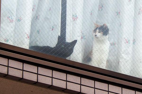 黒猫さんもかわいい