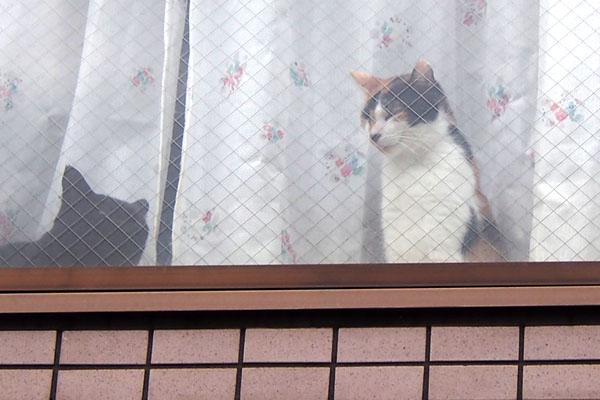三毛猫さんお座り
