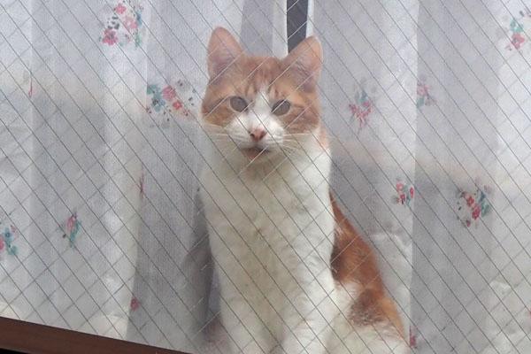 chashiro at window