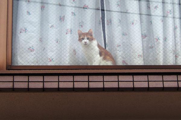 茶白さん 今窓に来た