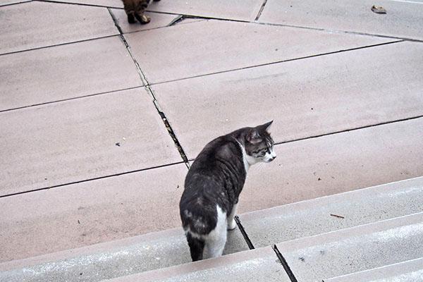 タンタル 階段 先導