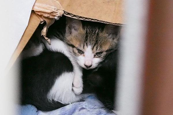 箱の中の仔猫たち