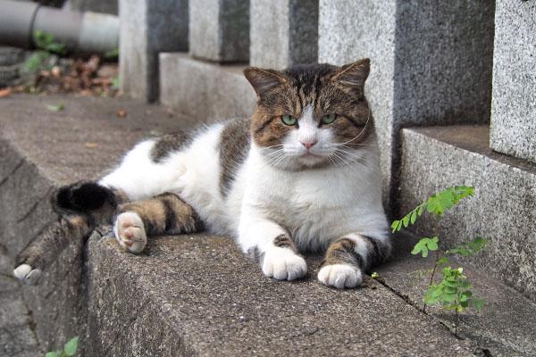 レオ太 優雅に猫ボラさんを待つ