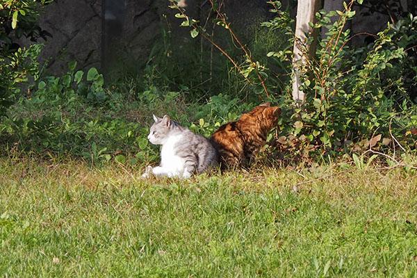 chrom and kuratan sunbathing