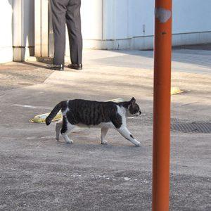 ombre walk