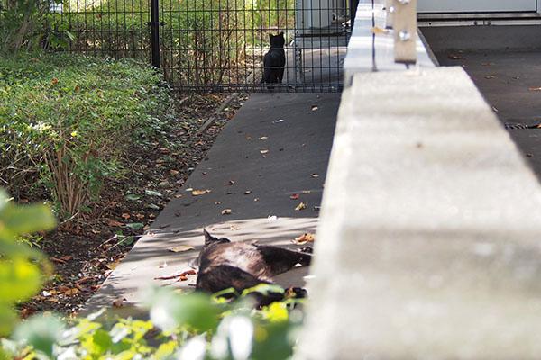 キトはフェンスの向こうに
