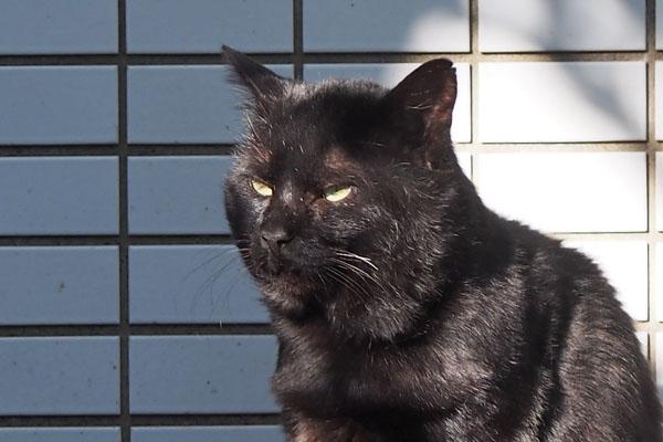 jetnero new black cat