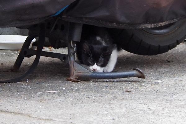 チョモ バイクの下に