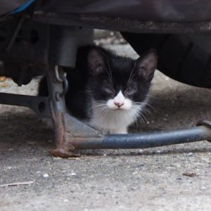 chomo under the bike