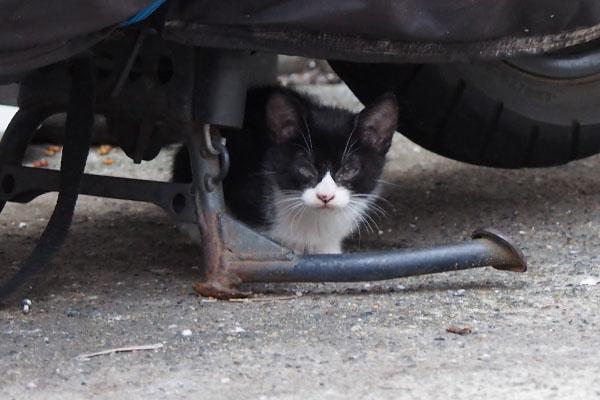 chomo under the bike