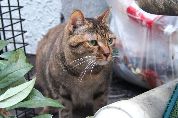 ヴェル 猫好きさんを見る