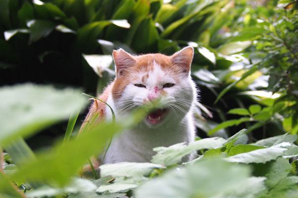 purin meowwww