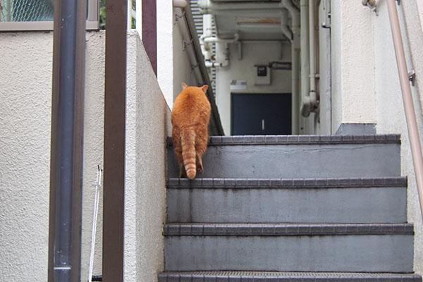 茶トラママ 階段端っこ