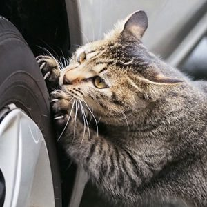koita nail scrutch with car