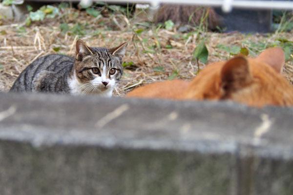 仔猫が見つめる