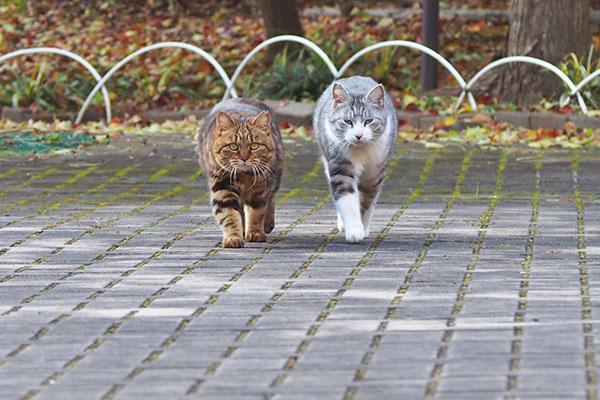 kuratan and chrom walk