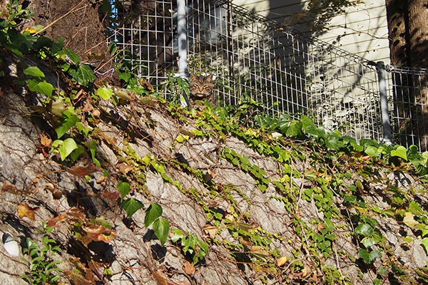 高い塀の上にコイキー