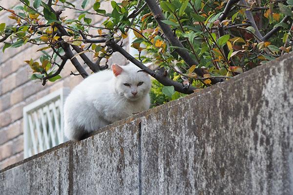 usagi on the wall