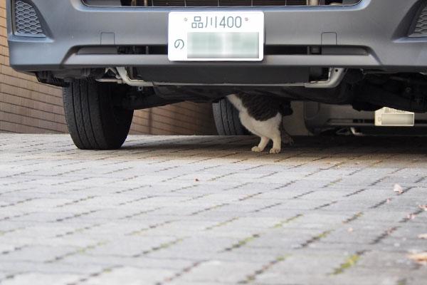 車の下に猫のあんよ