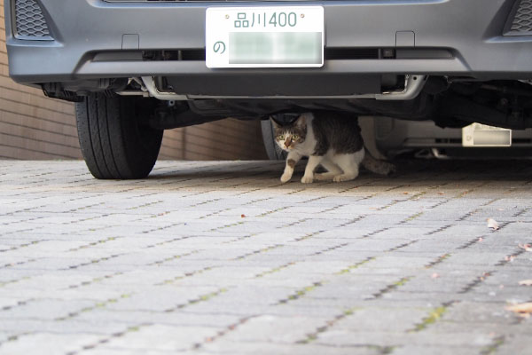 コーちゃん 車の下