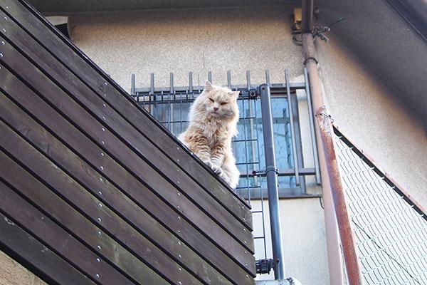 上を見るとナリコマ君