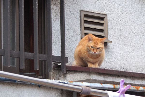 ソラちゃん 窓から出て来た