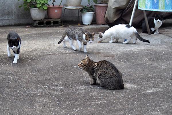 猫さん4匹