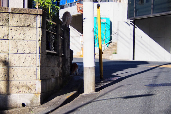 塀の上と下 ナリコとムートン