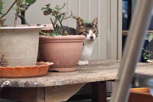 ホット 植木鉢の横