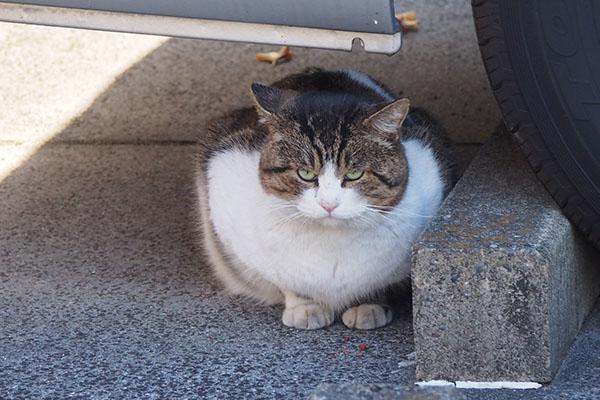レオ太 ちまっと