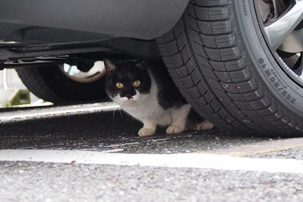 コテ 車の下かわいい顔