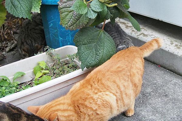 トトの向こう側 仔猫